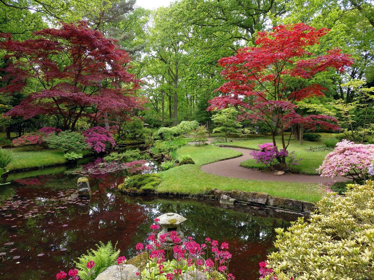Japanilainen puutarha Haagissa