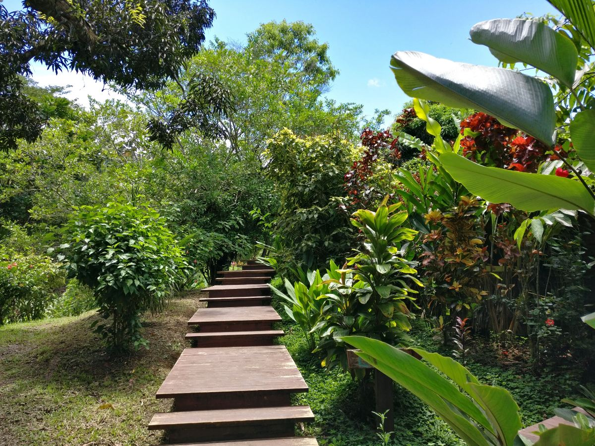 Solarte Island, Bocas del Toro
